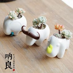 Cheap potted fruit plants, Buy Quality potted flower plants directly from China potted plant gift Suppliers:            Kawaii Ceramic Flowerpot Rhinoceros Elephant Buffalo GardenPlanter              Mater