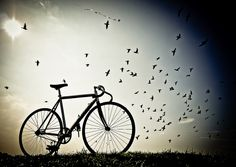 Free as a bird by Father_TU, via Flickr