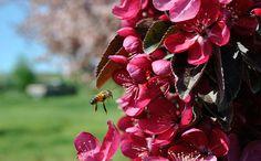 The Importance of Fruit Tree Pollination - Stark Bro's