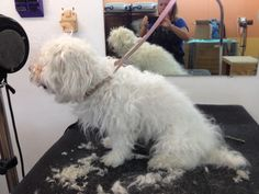 Badly matted