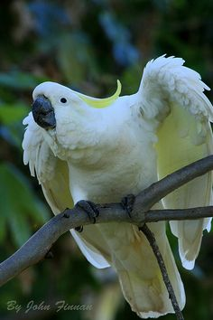 Cockatoo - Creator Created Birds and said, DO YOU NOT SEE HOW I HAVE CREATED BIRDS? WOULD YOU NOT THEN BELIEVE?
