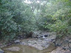 Natural Area Cinquera Mountain, madaged by ARDM, El Salvador... More info at (Spanish): http://ardmescinquera.blogspot.com/
