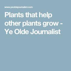 Plants that help other plants grow - Ye Olde Journalist