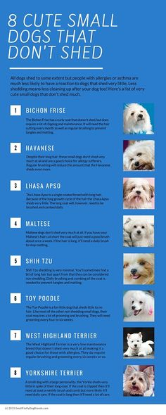 A list of eight of the cutest small dogs that don't shed much: http://smallfluffydogbreeds.com/small-dogs-that-dont-shed/