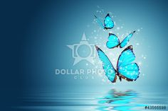 https://www.dollarphotoclub.com/stock-photo/butterfly/43565598 Dollar Photo Club millions of stock images for $1 each