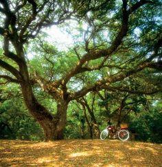 Explore Here Amelia Island - Florida Vacation