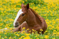 Cow, Horses, Horse Stuff, Animals, Animales, Animaux, Cattle, Animal, Animais