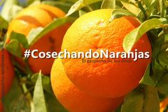 Inspirada por la novela Pelando naranjas, de James Lawless, realicé una búsqueda en Goodreads porque quería averiguar cuántos libros existen con la palabra naranja en su título. Por puro amor al ar...