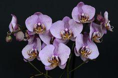 orchids-1528330_1920.jpg (1920×1280)