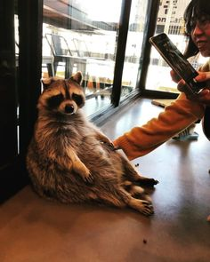 There's Literally A Raccoon Cafe In Seoul, Korea And It Will Change Your Life