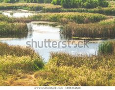Beautiful Lake Vacaresti Natural Park Stock Photo (Edit Now) 1695304660 Natural Park, Photo Editing, Royalty Free Stock Photos, Country Roads, River, Illustration, Nature, Pictures, Outdoor