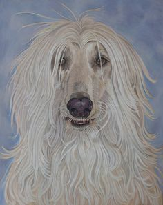Blondie by *Sarahharas07 on deviantART ~ Aphgan hound ~ colored pencil art
