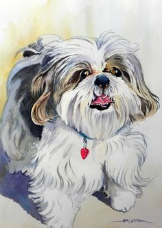 The use of grays for streaks and shadows Shih Tzu Hund, Shih Tzu Dog, Watercolor Canvas, Watercolor Animals, Animal Paintings, Animal Drawings, Dog Artwork, Yorkie Dogs, Dog Portraits
