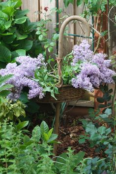 My Romantic Home: It's Lilac Time