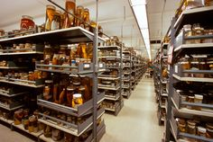 Incredible US Museum of Natural History Secret Collections Backstage – Fubiz Media