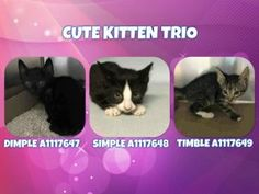 ❤️ SAFE: 7-13-2017 :Brooklyn BROOKLYN CENTER **MUST BE PULLED BY A NEW HOPE RESCUE** CUTE KITTEN TRIO – A1117647, A1117648, A1117649 7/8/17: THREE UNDERWEIGHT KITTENS NEED A FOSTER HOME WHERE THEY CAN GET SOME SOCIALIZATION.