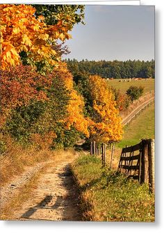 Country Road And Autumn Landscape Greeting Card by Michal Boubin