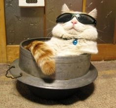Die 100 grossartigsten Katzenfotos aller Zeiten |