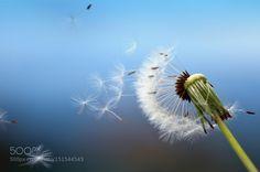 :) by chiaraandolfatto Macro Photography #InfluentialLime