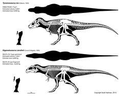 Tyranosaurus & Giganotosaurus skeletals - Scott Hartman