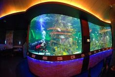 http://the-pet-chest.com/ Aquariums from Living Color, the professionals behind #FishTankKings on #NatGeo