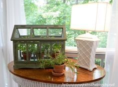 A Tabletop Greenhouse for Growing Herbs | http://betweennapsontheporch.net/tabletop-greenhouse-or-terrarium-for-growing-herbs/
