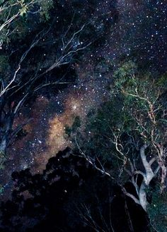 Milky Way through the Eucalypt Trees (Explored 8 June 2012) by Indigo Skies Photography, via Flickr