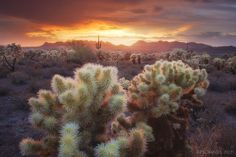 Light Catchers by Peter Coskun on 500px