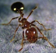 How to quickly and easily get rid of ants fire ants ant and gardens how to get rid of ants in your yard easily ccuart Choice Image
