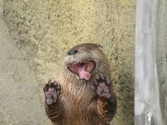 Silly otter.
