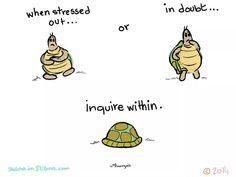 Yoga turtle - inquire within