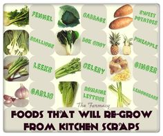 """There's nothing like eating your own home-grown veggies, & there are heaps of different foods that will re-grow from the scrap pieces that you'd normally throw out or put into your compost bin. It's fun, & very simple… if you know how to do it. Just remember… the quality of the """"parent"""" vegetable scrap will help to determine the quality of the re-growth. So wherever possible buy local organic produce, so you know that your re-grown plants are fresh, healthy & free of chemical & genetic meddling."""