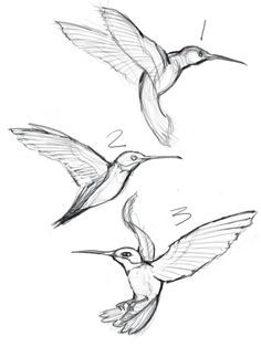 43 Super Ideas Humming Bird Sketch Hummingbird DrawingYou are in the right place about bird tattoo Here we offer you the most beautiful pictures about the bird clipart you are looking for. When you examine the 43 Super Ideas Humming Bird Sketch Hum Bird Drawings, Animal Drawings, Drawing Sketches, Drawing Ideas, Drawing Birds, Sketches Of Birds, Drawing Faces, Pencil Sketches Of Flowers, Sketches Of Animals