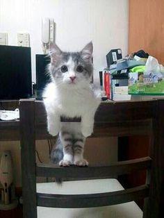 ♥@one_bad_cat1.......★