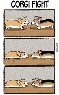 Corgi Fight...haha yup
