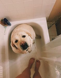 While tile is are most favorite thing, dogs come in a close second. Cute Puppies, Dogs And Puppies, Cute Dogs, Doggies, Cute Baby Animals, Animals And Pets, Funny Animals, Chien Golden Retriever, Cute Creatures