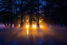 #роща болотных кипарисов сукко рассвет утро Photographer: Никифоров Егор