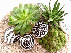 love the succulents with the painted rocks.