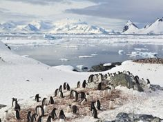 No cruise region is more rugged and remote than Antarctica -- a bucket-list worthy destination for many a traveler.