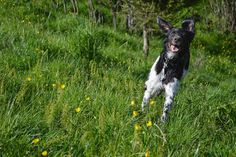 Gårdstunet Hundepensjonat: Dagens dose digg! Hunder som koser seg, og får str...