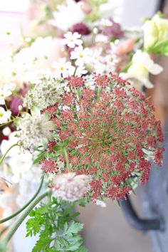 Daucus Carota is such a gorgeous filler. Every stage is fabulous. Stage, Bloom, Flowers, Plants, Plant, Royal Icing Flowers, Flower, Florals, Floral