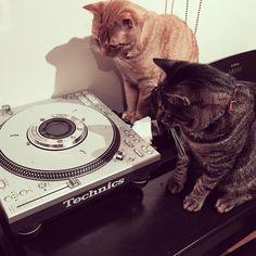 『いたずらも 二匹でやれば 怖くない』  #茶トラ#キジトラ#猫#ネコ#ねこ#cat#DJ