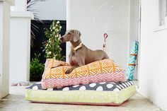 Stylish Dog Beds and Accessories from POOCCIO - Dog Milk