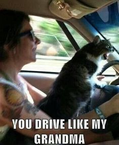 Funny pictures about Road Rage Cat. Oh, and cool pics about Road Rage Cat. Also, Road Rage Cat. Funny Animal Memes, Funny Animals, Cute Animals, Funny Memes, Funny Cat Gif, Meme Gifs, Funny Signs, I Love Cats, Crazy Cats