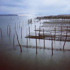 Les parcs à huîtres Cap-Ferret