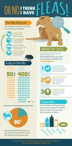 Infographic Facts About Fleas & Ticks on Your Pet - Pet Health - Gesunde World Dog Health Tips, Pet Health, Health Facts, Flea Remedies, Natural Remedies, Dog Facts, Dog Shampoo, Veterinary Medicine, Flea And Tick