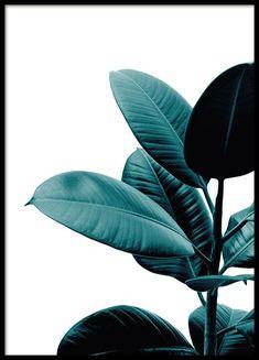 Botanik-Poster mit dem Foto einer Grünpflanze mit schönen Blättern. Dieses Poster bringt im Handumdrehen ein Stück Natur in Ihre vier Wände. Gestalten Sie doch gleich mit mehreren Botanik-Postern eine kleine Bilderwand, zum Beispiel im Wohnzimmer. www.desenio.de