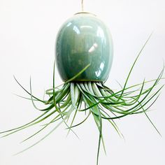 air plant pods that cats can't knock over! / by @Mike McDowell, featured on fab. http://fab.com/sale/5980/product/134783/wnon5s/?fref=product-invite-tw