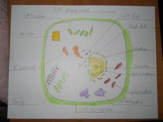Science - plant cell 2011
