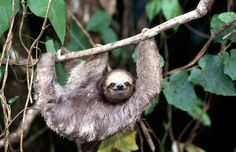 Hanging out with the sloths in Costa Rica. Seen by Myrna and Howard